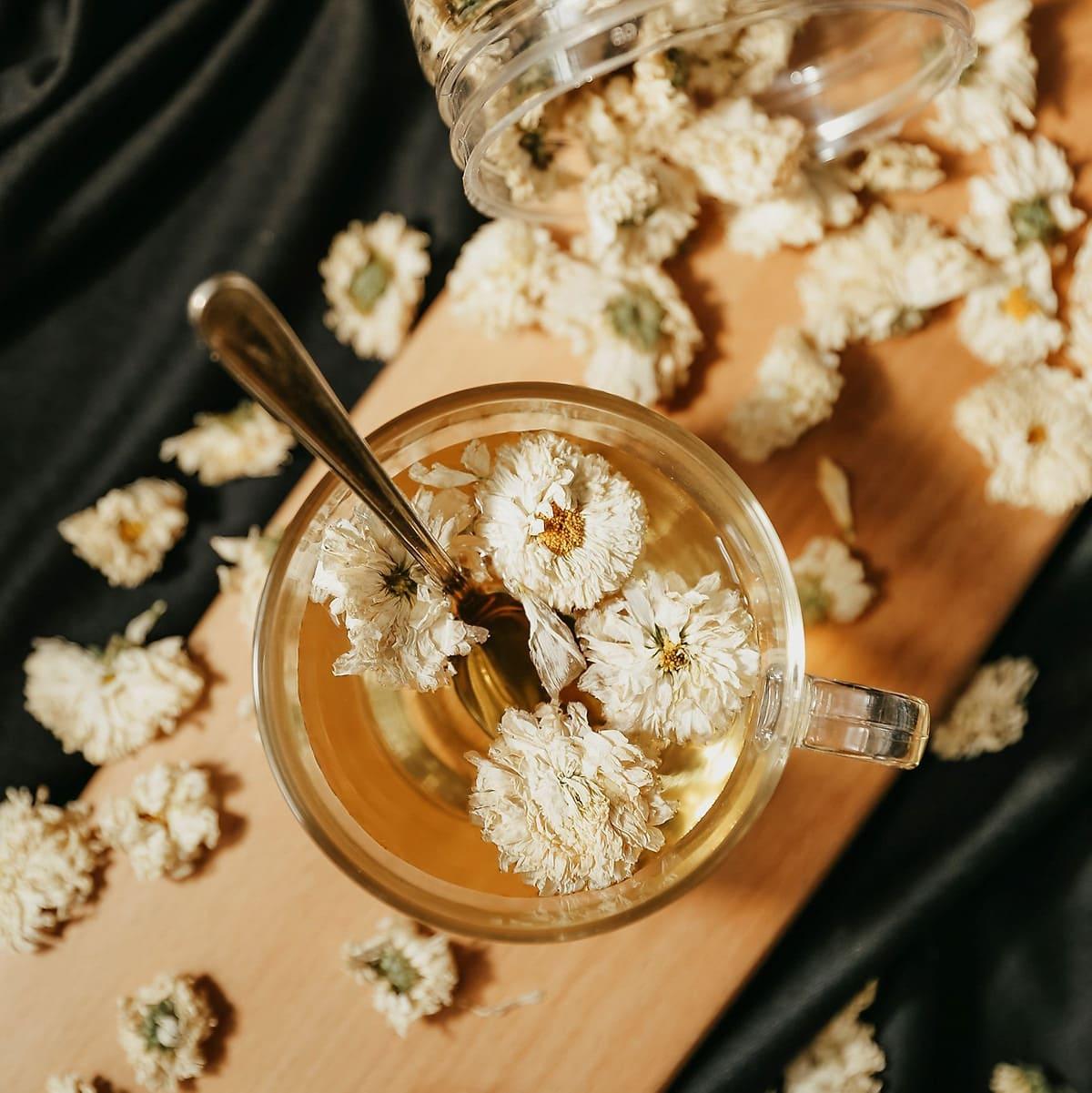 trà hoa cúc chữa viêm họng