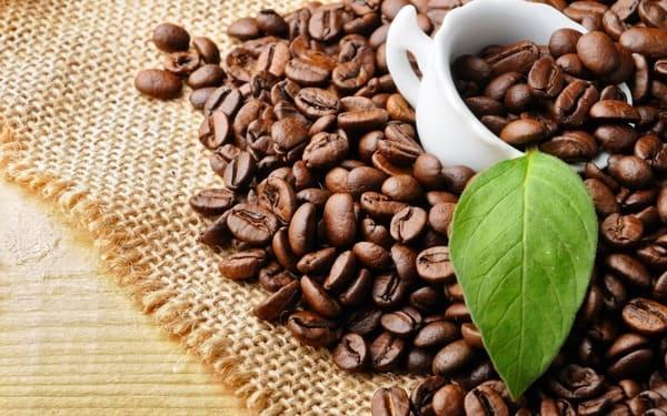 Tìm nguồn gốc ngon pha cà phê để bán