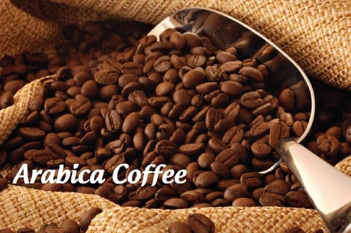 phân biệt các loại hạt cà phê